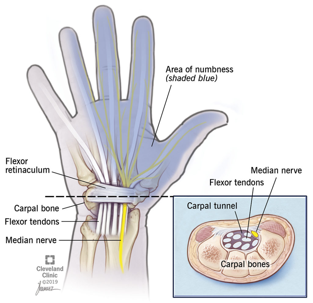 tendons in hand and wrist